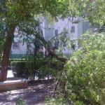 Puertollano y la rebelión de los árboles
