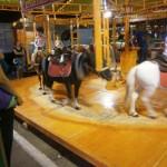 El pleno decidirá si se prohíben en Ciudad Real los circos con animales y las atracciones de ponis