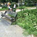 Ciudad (PP) compara la caída de una rama con el derrumbe del falso techo del Hospital de Puertollano