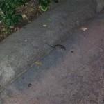 Correrías de Baldomero, el ratón puertollanero