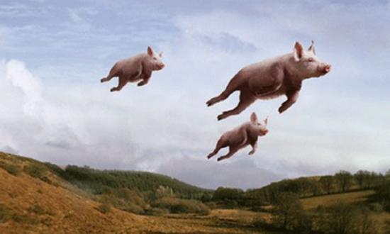 5-cerdos voladores