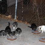 Ciudad Real Cats presenta al Ayuntamiento su proyecto para controlar mediante esterilización las colonias de gatos abandonados