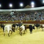 Seria estampa durante el desencajonamiento de los toros en la Plaza de Daimiel