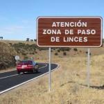 La Diputación de Ciudad Real acomete mejoras en una carreteras para minimizar riesgos de atropellos de lince