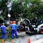 La alcaldesa de Puertollano pide disculpas al herido por la caída de una rama y asegura que el Ayuntamiento trabaja diariamente en la conservación de los árboles