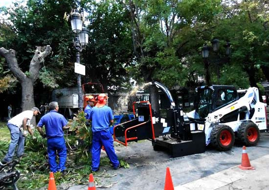 Trabajos de de retirada de ramas de un árbol en el paseo de San Gregorio