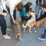 Jornada de Solidaridad con la protectora La Bienvenida y Ciudad Real Felina