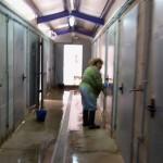 Ciudad Real: Un informe municipal revela que en la obra de la protectora se certificaron 70.000 euros más de lo realmente ejecutado