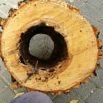 """Puertollano y la maldición de los árboles zombi: los jardineros defienden su trabajo, y advierten de que """"la mitad"""" de los árboles del Paseo es víctima de enfermedades"""