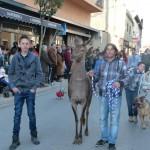 """La cierva """"Gisela"""" destaca en la fiesta en honor a San Antón en Manzanares"""