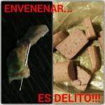 Puertollano: Ojo a las trampas mortales para perros