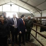 Almodóvar del Campo: Lozano quiere construir un pabellón ferial que albergue la feria del ganado