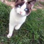 Ciudad Real Cats recuerda que, más allá del informe del Colegio de Veterinarios, lo gatos abandonados son responsabilidad del Ayuntamiento