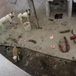 """Denuncian una """"casa de los horrores"""" canina en Puertollano"""