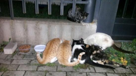 gatos-abandonados-03
