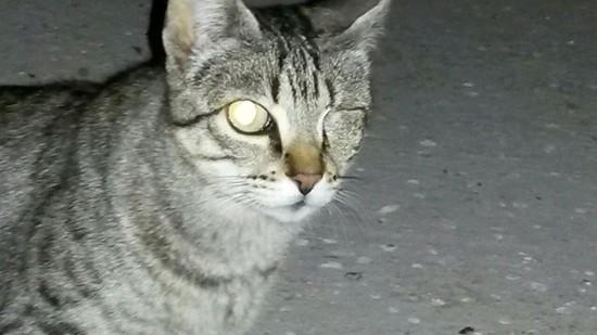 gatos-abandonados-04