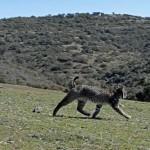 "Ecologistas en Acción advierte de que se pretende autorizar a los cazadores ""peligrosas"" cajas trampa para capturar gatos asilvestrados"