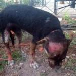 Puertollano: Convocan una concentración de protesta por la muerte del perro quemado vivo