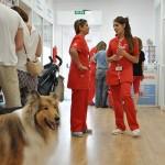 Ciudad Real: La tienda de mascotas Kiwoko abre sus puertas con una fiesta en el Parque ComercialPuerta del AVE