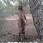 Hallan a un perro ahorcado en un pinar de Tomelloso