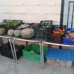 Tarde agroecológica en La Purga
