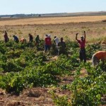 El Consejo Regulador organiza el I Concurso de selfie de vendimia en La Mancha