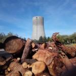 Puertollano: El gigante Ence prevé construir en las instalaciones de Elcogas una planta eléctrica de biomasa de 50 megavatios