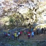 Puertollano: La Concejalía de Cultura llevó a descubrir el roble de El Abuelo en una ruta senderista