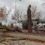 Un árbol se parte y cae sobre la valla del Centro Ocupacional Fuensanta