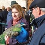 El pavo 'Cañete' se lleva la estatuilla de San Antón