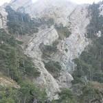 La UCLM participa en un trabajo sobre los efectos del cambio climático en los árboles de montaña