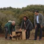 Liberadas dos águilas imperiales curadas en el Centro de Recuperación de Fauna 'El Chaparrillo'