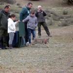 Mesta, una nueva hembra de lince ibérico liberada en la provincia de Ciudad Real