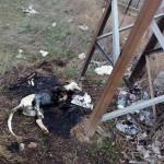 """Puertollano: La Guardia Civil investiga la muerte de otro perro hallado """"medio quemado"""" en las cercanías del parque del Terri"""