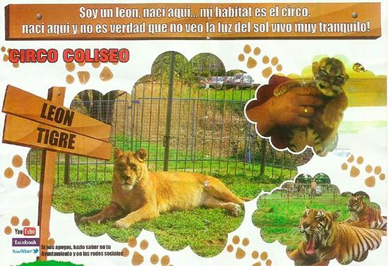animales-circo
