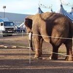 Ciudad Real: El elefante Dumbo