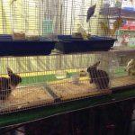 El PP muestra su sorpresa por la presencia de animales enjaulados en la Feria