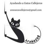 """Puertollano: Arañazos pide que deje de relacionarse el """"presunto"""" aumento de ratas con la alimentación de los gatos callejeros"""