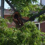 Los operarios de Parques y Jardines acondicionan el árbol dañado en la rotonda de Cruz Roja