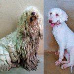 Nuevo caso de maltrato animal: De cinco perros que fueron envenenados solo sobrevivió Magia