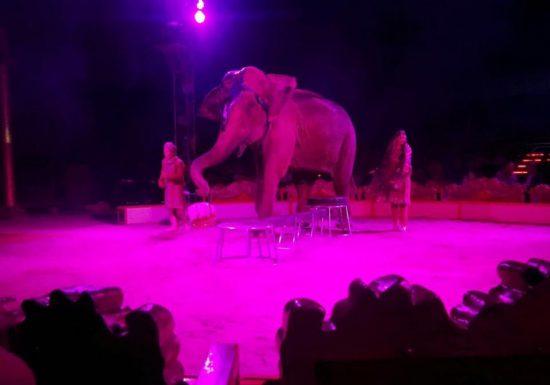circo-elefante