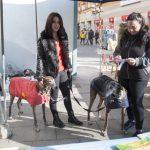 La Bienvenida recibirá una subvención específica para mantenimiento y las asociaciones felinas firmarán un convenio con el Ayuntamiento