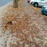 El Grupo Popular exige a Zamora que «limpie la ciudad y recoja las hojas»