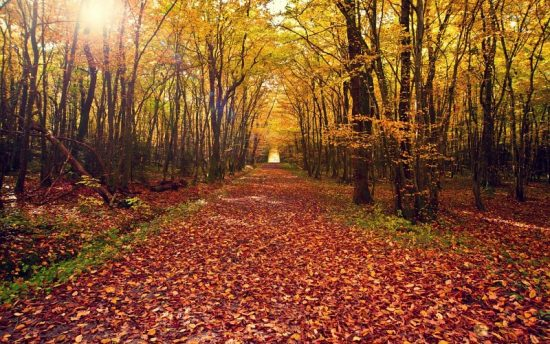 leaves-nature-landscapes-leaves-autumn-fall-path-trail-trees-forest-woods-tunnel-wallpaper-205477