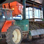 La cooperativa El Progreso recoge la arbequina y generalizará la cosecha de aceituna después del Día de la Inmaculada