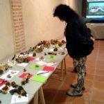 Villarrubia de los Ojos se echa al monte en busca de setas en las Jornadas Micológicas, que cumplen cinco ediciones
