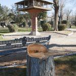 Talan una decena de árboles del Parque de Gasset que se encontraban en mal estado