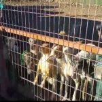 PROANIMAL CLM solicita al Gobierno regional que la Ley de Bienestar Animal no excluya a los perros de caza