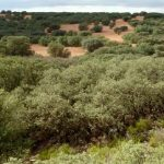 Un recorrido por los paisajes del Quijote