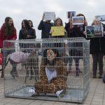 """Colectivos animalistas volverán a concentrarse a las puertas del circo para rechazar la """"explotación"""" de animales salvajes"""